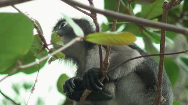 cu la monkey in tree, railay beach, thailand - railay beach stock videos and b-roll footage