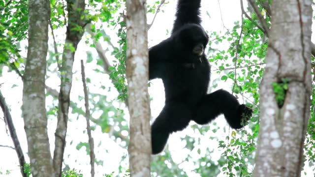 monkey is hanging on tree's branch - monkey stock videos & royalty-free footage