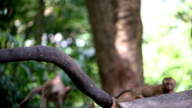 猿は、タイのプーケットの自然の森に住んでいます。 - 戦う点の映像素材/bロール