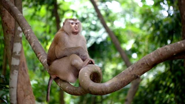 vidéos et rushes de singe vit dans une forêt naturelle de phuket thaïlande. - partie du corps d'un animal