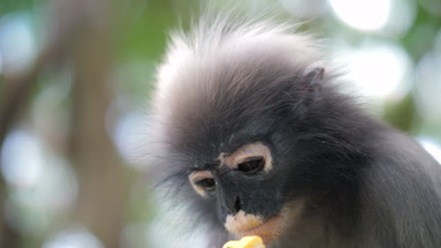 monkey lives in a natural forest - group of animals stock videos & royalty-free footage