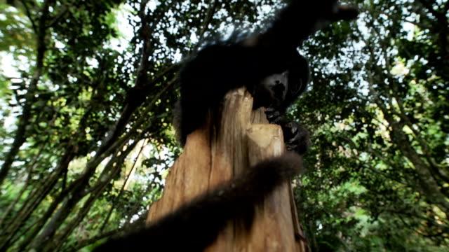 monkey on a trunk - baumstumpf stock-videos und b-roll-filmmaterial