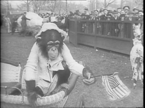 monkey on back of an agouti, both wearing a leash held by a zookeeper at the bronx zoo in new york city / close up of the monkey and agouti / close... - タータンチェック点の映像素材/bロール