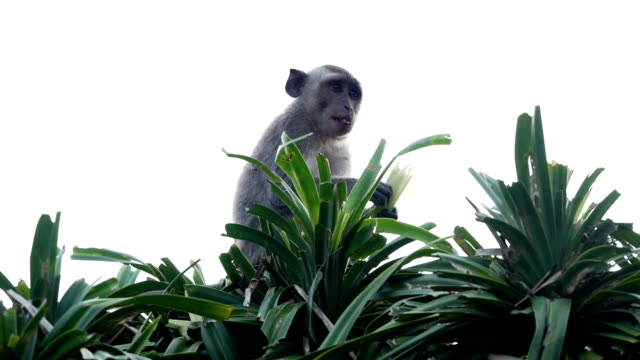 monkey on top of roof