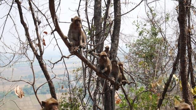 vídeos de stock, filmes e b-roll de macaco na árvore - árvore tropical