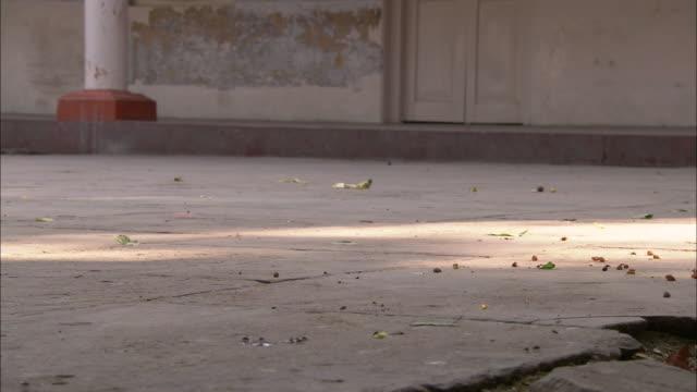 a monkey passes through a temple courtyard in india. - atrium grundstück stock-videos und b-roll-filmmaterial