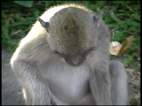 monkey playing with hat - letterbox format stock videos & royalty-free footage