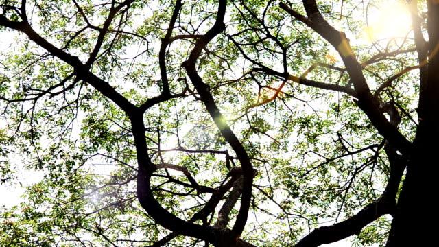 monkey pod tree - pod group of animals stock videos & royalty-free footage