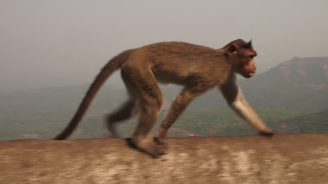 a monkey runs across a barricade in rural india - primate stock videos & royalty-free footage