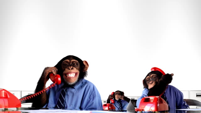 stockvideo's en b-roll-footage met monkey service department - humor