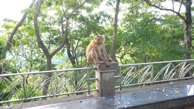 monkey sit on a bridge - thailand stock videos & royalty-free footage