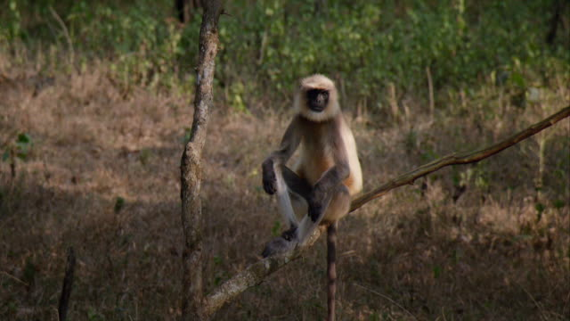 a monkey sitting on a tree - one animal stock videos & royalty-free footage