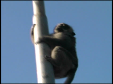monkey sliding down pole - pole stock videos & royalty-free footage