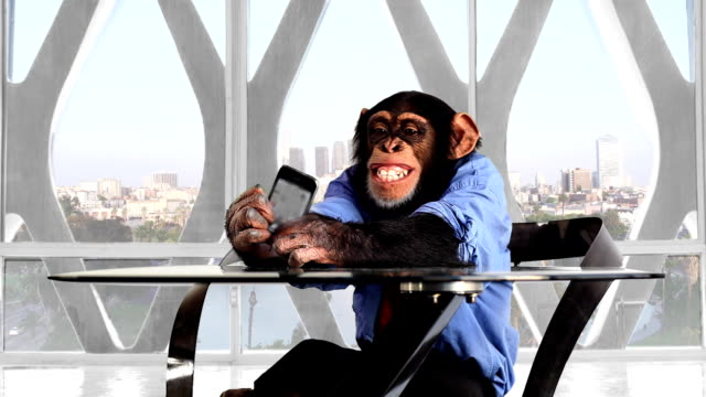 Monkey Smartphone das Büro in Los Angeles