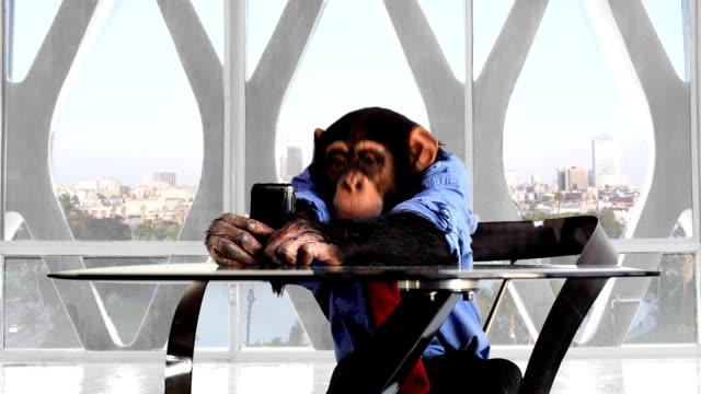 モンキースマートフォンロサンゼルスのオフィス - 猿点の映像素材/bロール
