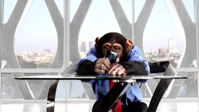 monkey smartphone das büro in los angeles - multitasking stock-videos und b-roll-filmmaterial
