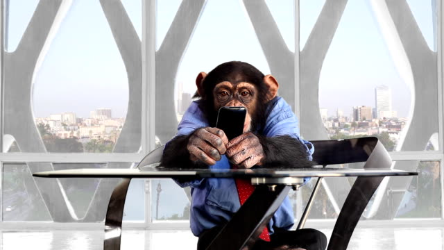 monkey smart phone los angeles office - technophile stock videos & royalty-free footage