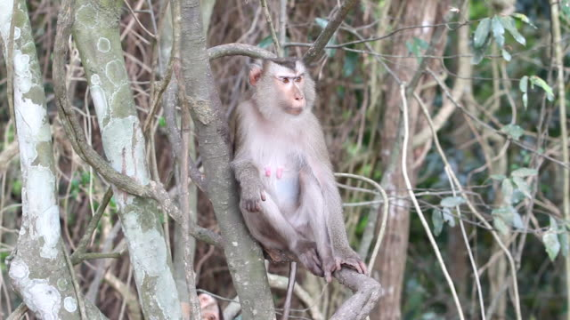 猿類 - 一匹点の映像素材/bロール