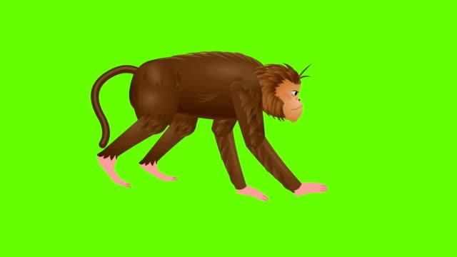monkeyrun-zyklusanimation - neuweltaffen und hundsaffen stock-videos und b-roll-filmmaterial