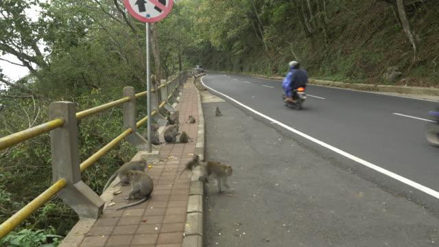 WS scimmie sul ciglio della strada