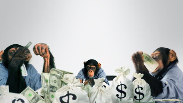 stockvideo's en b-roll-footage met monkeys eating cash - steel
