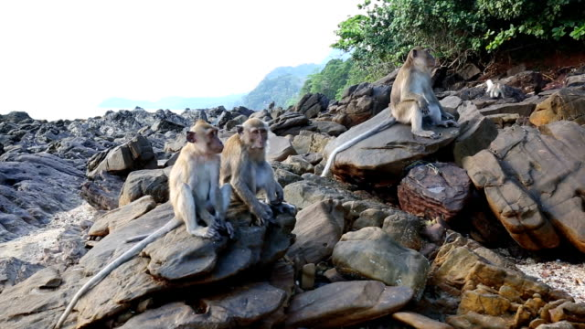 monkeys in thailand - nosy stock videos and b-roll footage