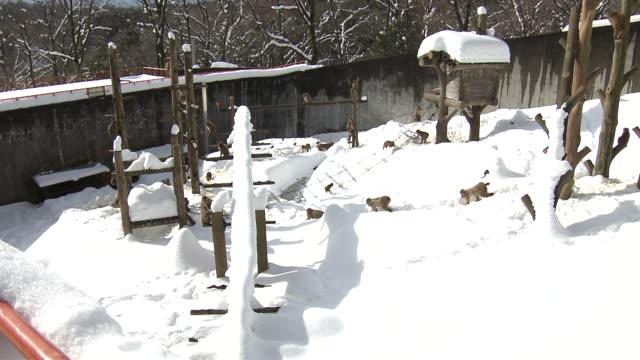 vídeos y material grabado en eventos de stock de monkeys in the snow in ishikawa, japan - ishikawa prefecture