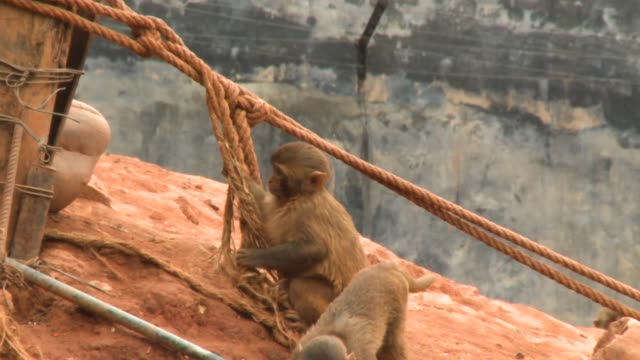 monkeys playing tag in wildlife reserve - playing tag stock videos & royalty-free footage