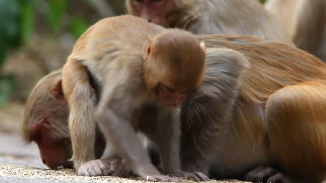 stockvideo's en b-roll-footage met monkeys - ghana