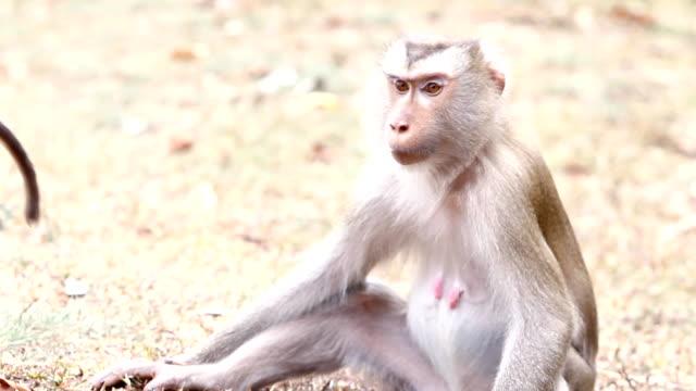 monkeys - flea insect stock videos & royalty-free footage