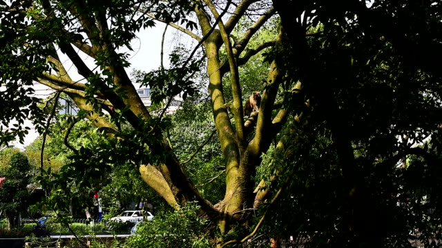 monkeys were playing in the tree - small group of objects stock videos & royalty-free footage