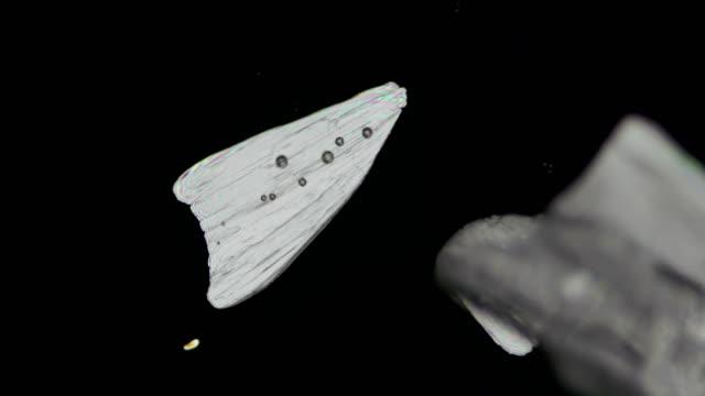 monosodium glutamate crystallization under polarized light 4k timelapse video - polarizer stock videos & royalty-free footage