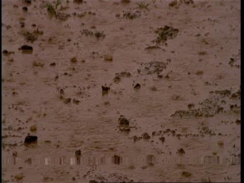 vidéos et rushes de cu monsoon rain falling on muddy ground, gujarat, india - mouillé