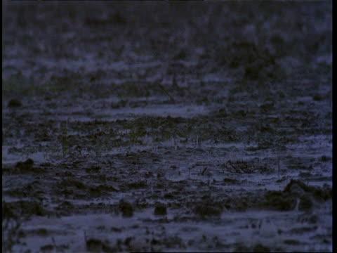 MCU Monsoon rain falling on to wet ground, Gujarat, India