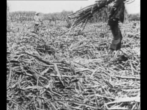 montage aerials filipino coast manila / workers in sugar cane fields / train approaches and passes pulling load of sugar cane / montage filipino... - isola di luzon video stock e b–roll