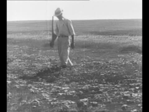 montage cornstalks destroyed by grasshopper infestation in nebraska / cu man's hand holds ears of nebraska corn eaten by grasshoppers / man walks... - eaten stock videos & royalty-free footage