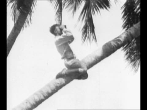 montage men with binoculars sit on rock in tree as they watch for liquor schooners to arrive in the bahamas / pan us coast guard officers stand on... - 禁酒法点の映像素材/bロール