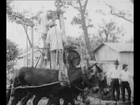 montage mules power a makeshift oil drill as africanamerican men on top of the rig prospect for oil and white men look on in san antonio tx/ tiltdown... - ドリル点の映像素材/bロール