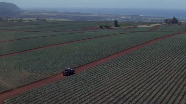 A montage of a truck driving across a pineapple plantation.