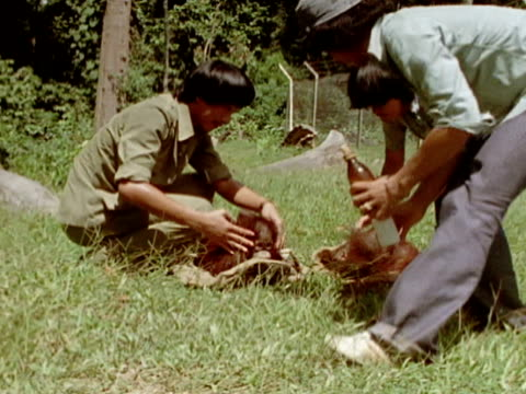 montage of caregivers drying and feeding two young orangutans. - 荒い麻布点の映像素材/bロール