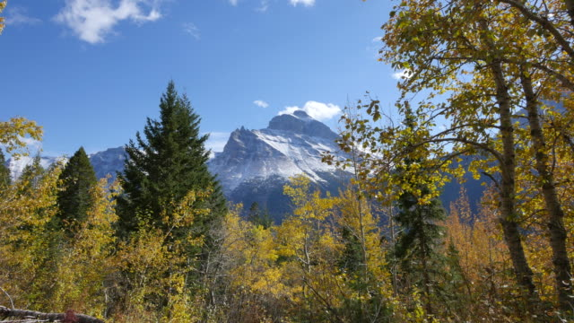 vídeos de stock, filmes e b-roll de montana golden leaves frame mountain - árvore de folha caduca