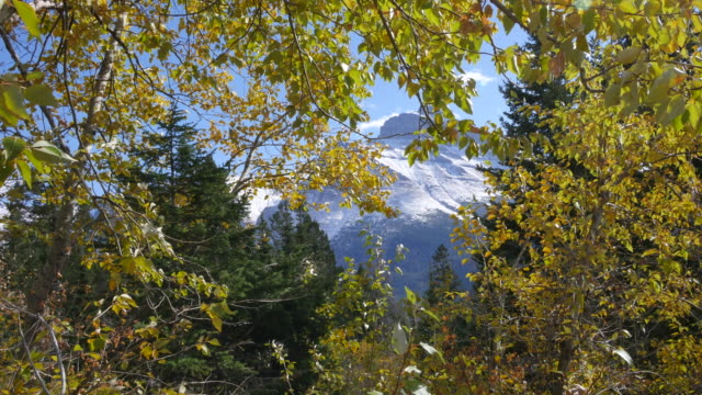 montana light shifts on golden leaves and mountain peak - laubbaum stock-videos und b-roll-filmmaterial