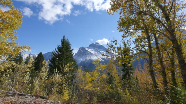 montana mountain seen through golden leaves - kieferngewächse stock-videos und b-roll-filmmaterial