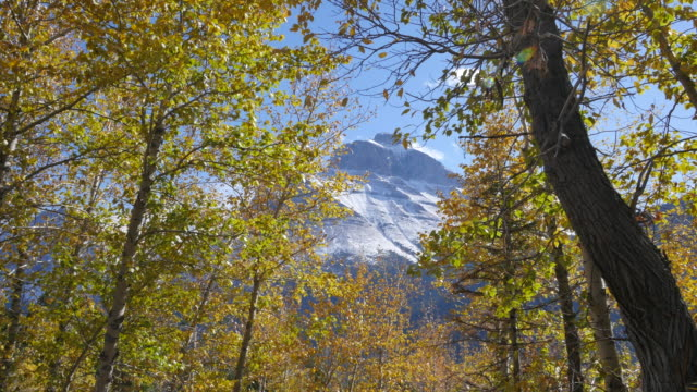 montana mountain through golden leaves - aspen tree stock videos & royalty-free footage