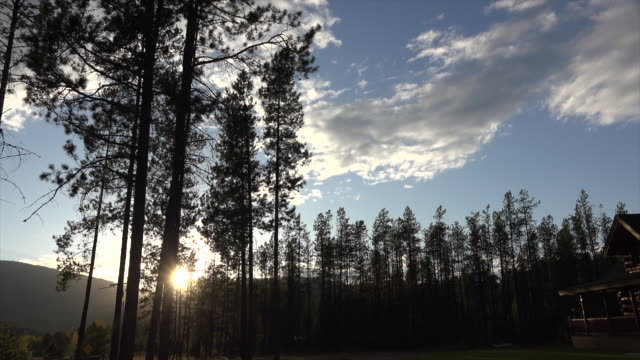 Montana pines and bright sun with cloud
