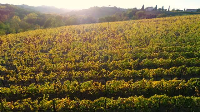 montepulciano wine region, tuscany, italy - siena italy stock videos and b-roll footage