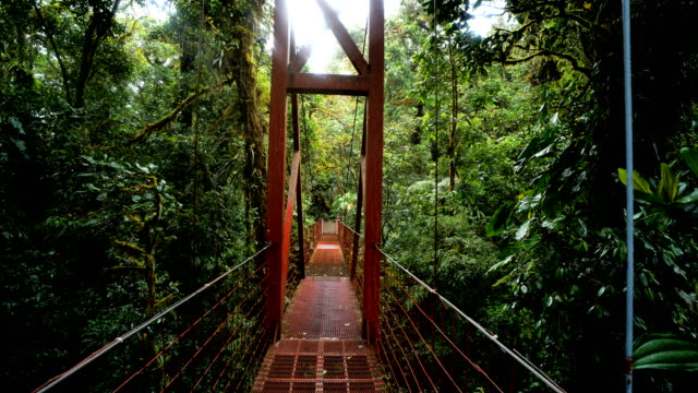 stockvideo's en b-roll-footage met monteverde cloud forest, costa rica: canopy walk - duurzaam toerisme