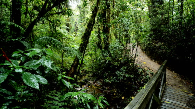 monteverde cloud forest, costa rica - natural landmark stock videos & royalty-free footage