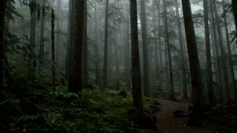 vidéos et rushes de forêt côtière moody - forêt