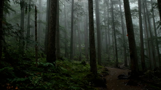 moody coastal forest - forest stock videos & royalty-free footage